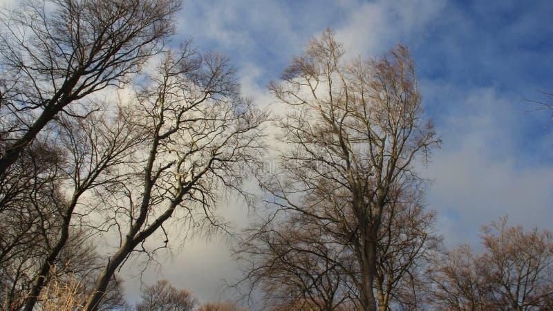 Albero senza foglie nell'inverno con la nuvola di nimbus fotografia stock libera da diritti