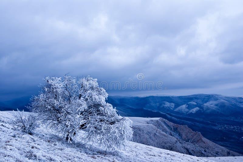 Albero Snowbound immagine stock