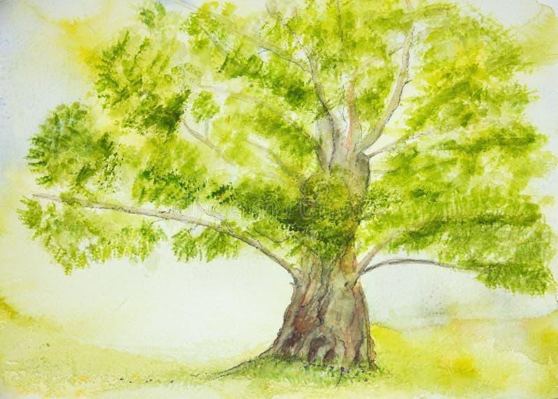 Albero solitario con il grande tronco illustrazione vettoriale
