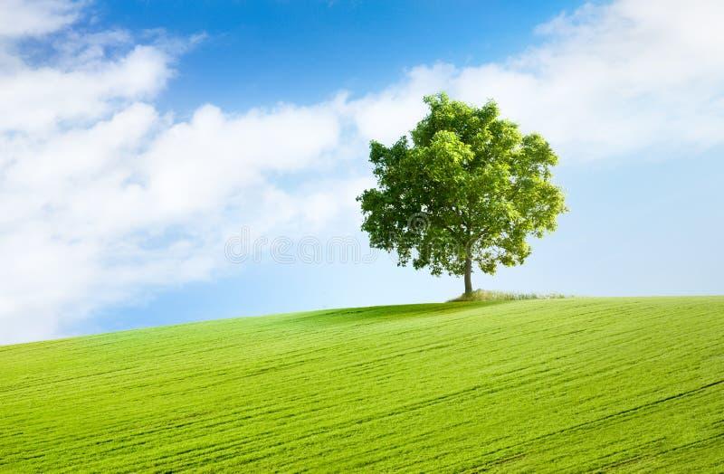 Albero solitario nel bello paesaggio fotografia stock