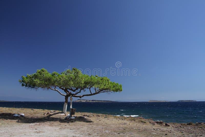 Albero solitario su una scogliera fotografie stock libere da diritti