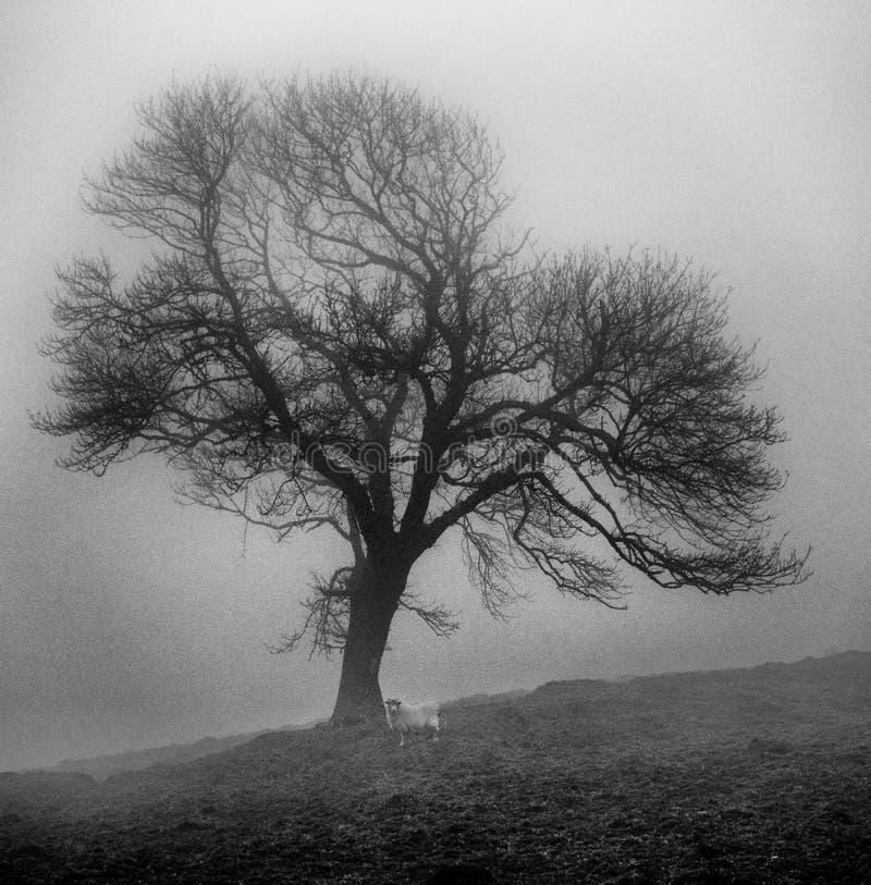 Download Albero solo fotografia stock. Immagine di misty, agricoltura - 55362856