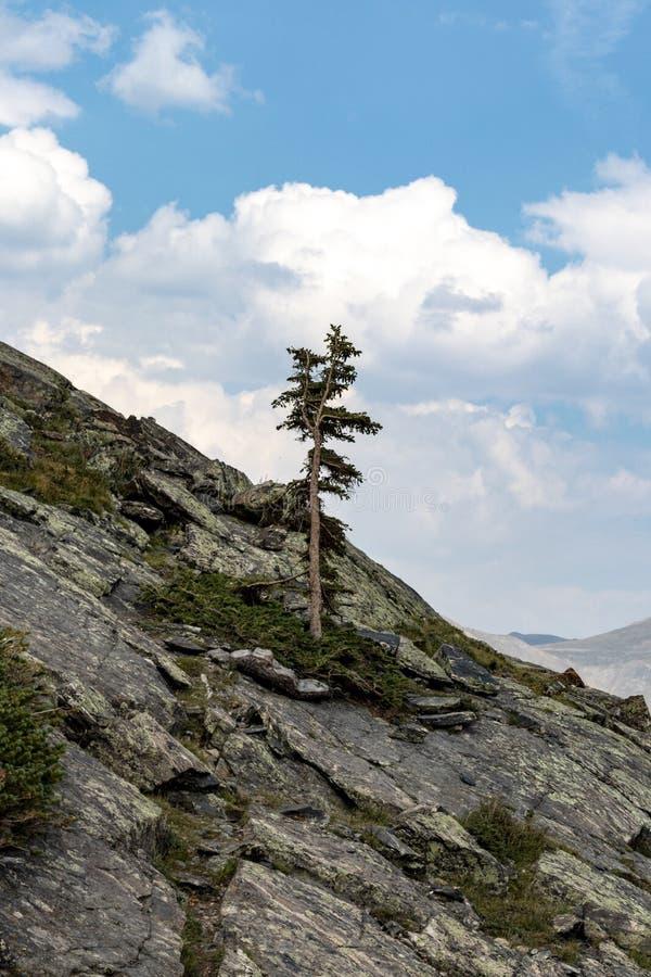 Albero solo dal lato della montagna fotografie stock