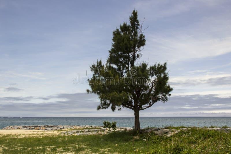Download Albero solo dall'oceano immagine stock. Immagine di orizzonte - 55359359