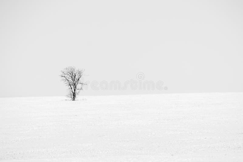 Albero solo del paesaggio in bianco e nero fotografia stock