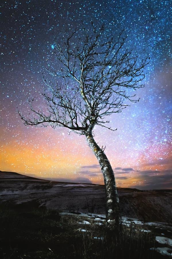 Albero solo del paesaggio di notte di inverno che sta in una pianura della montagna contro il contesto della Via Lattea nordica e fotografia stock