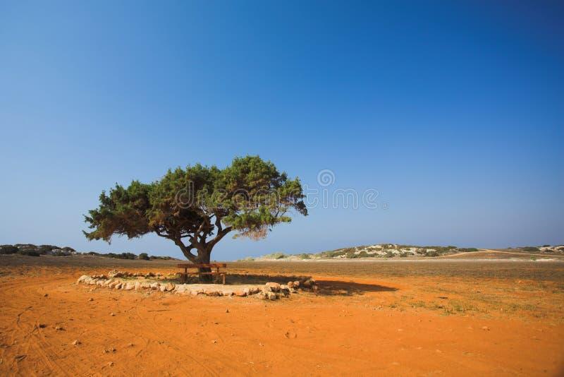 Albero solo in deserto di pietra fotografia stock