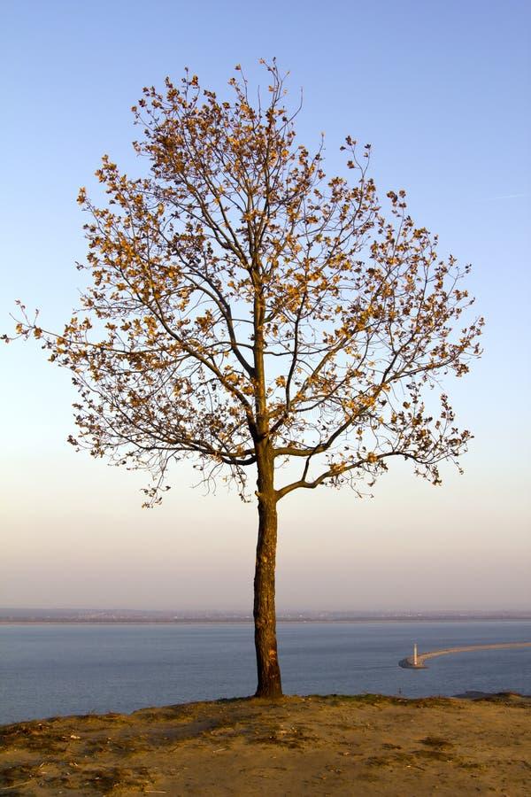 Albero solo di autunno fotografie stock