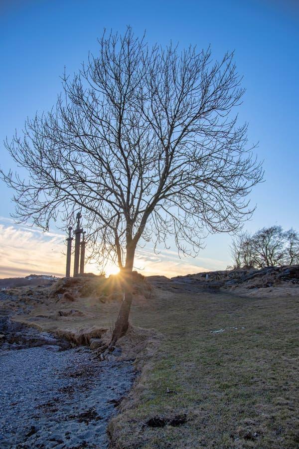 Albero solo in hafrsfjord, Stavanger immagine stock libera da diritti