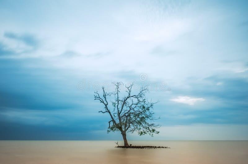 Albero solo in mezzo all'oceano, esposizione lunga fotografie stock