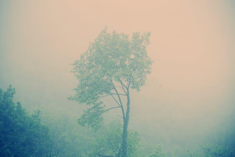 Albero solo in mezzo alla foresta fotografia stock libera da diritti