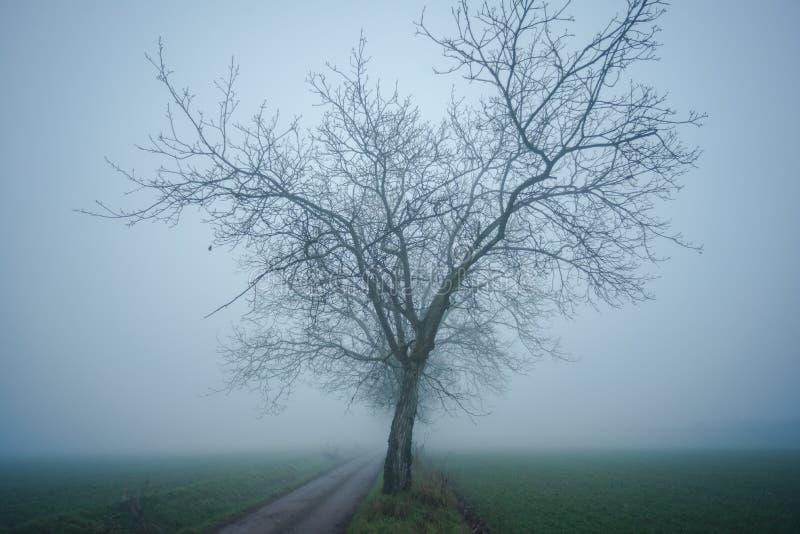 Albero solo nel giorno freddo e nebbioso immagine stock libera da diritti