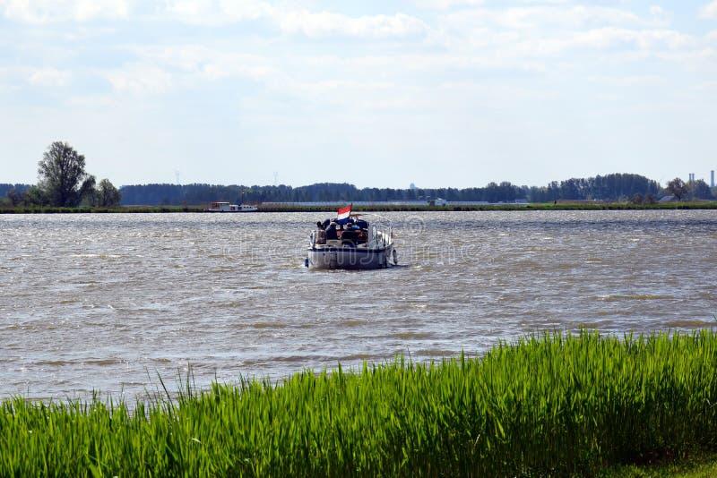 Albero solo nel paesaggio olandese fotografia stock