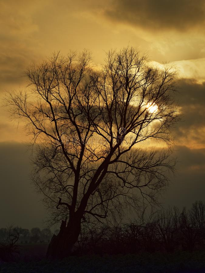 Albero solo nell'inverno e nuvole dorate al tramonto fotografia stock libera da diritti