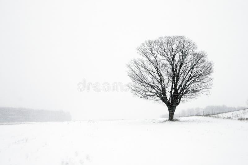 Albero solo nella bufera di neve di inverno fotografie stock libere da diritti