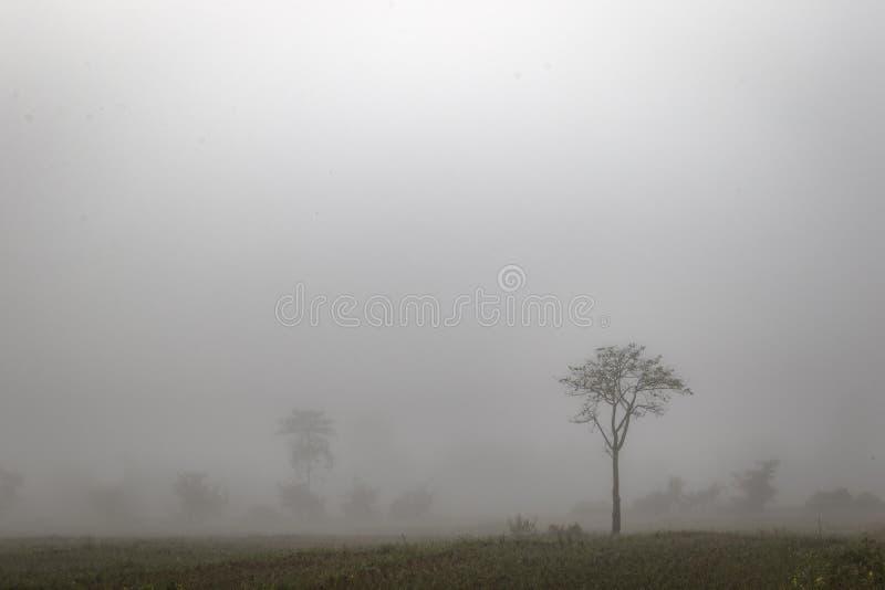 Albero solo nella foschia in Tailandia del Nord immagine stock