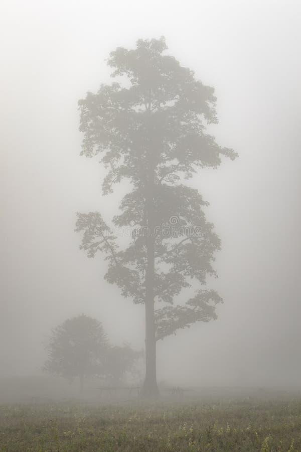 Albero solo nella foschia in Tailandia del Nord immagini stock libere da diritti