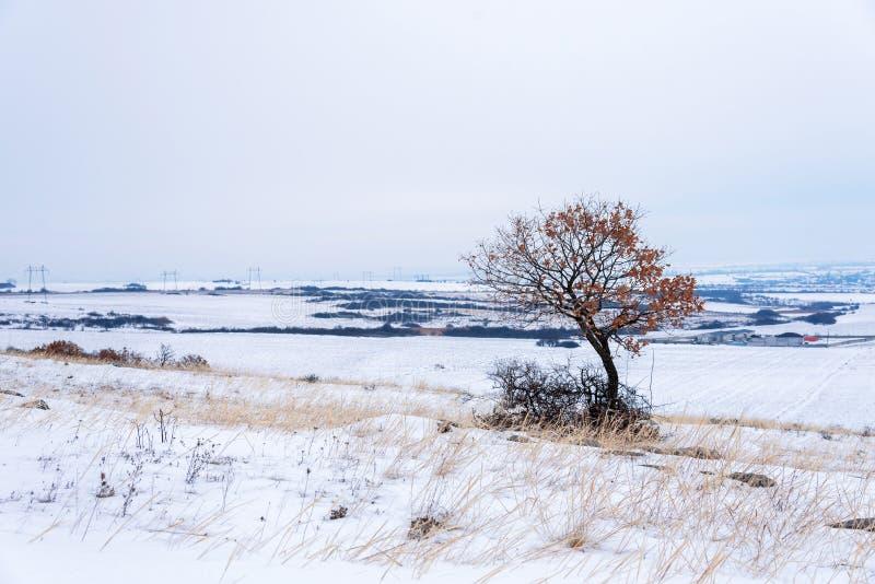 Albero solo Prima neve di inverno fotografie stock