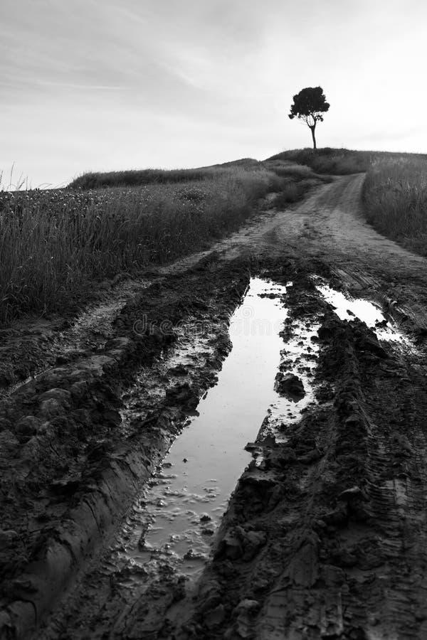 Albero solo su una collina con la strada fangosa in paese immagini stock libere da diritti