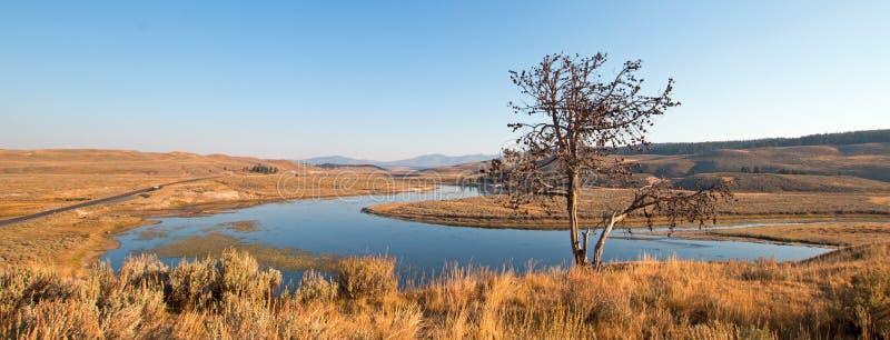 Albero solo sul bluff sopra il fiume Yellowstone in Hayden Valley nel parco nazionale di Yellowstone nel Wyoming immagini stock