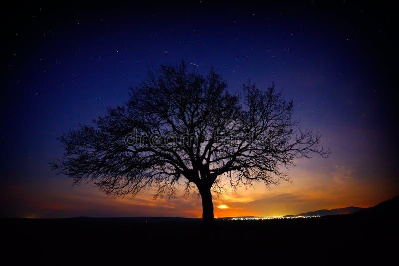 Albero solo sul campo all'alba fotografie stock