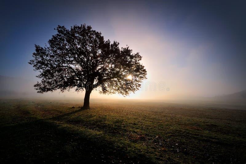 Albero solo sul campo all'alba fotografia stock