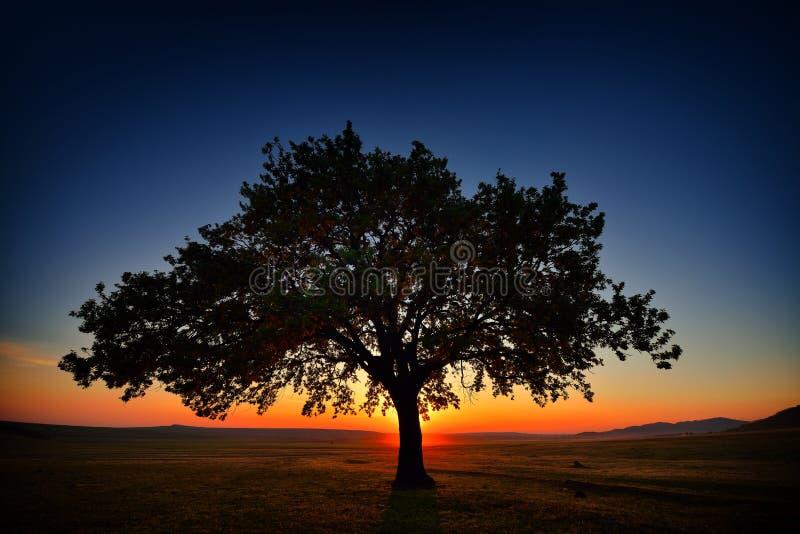 Albero solo sul campo all'alba fotografia stock libera da diritti