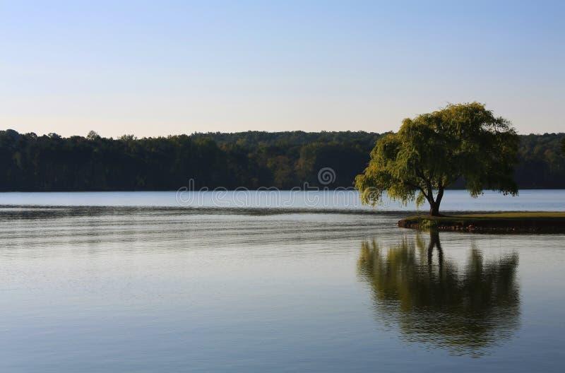 Albero solo sul fiume immagini stock libere da diritti