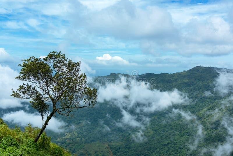 Albero solo sul giacimento della montagna durante l'alba della foschia Bello paesaggio naturale nell'ora legale Phu Thap Boek fotografia stock libera da diritti
