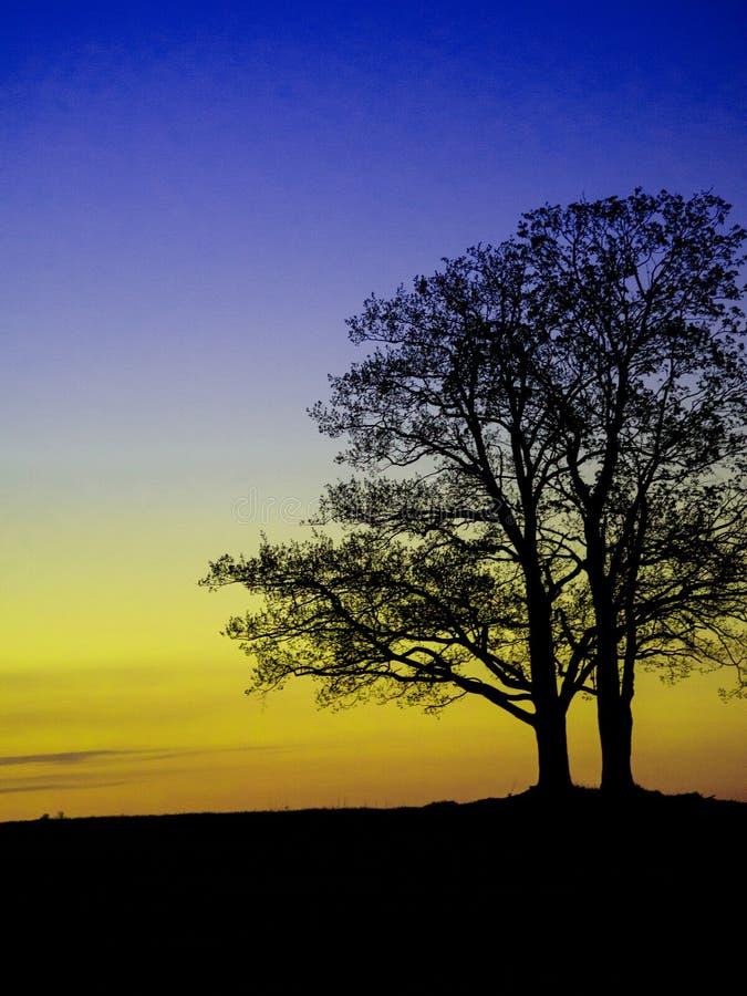 Albero solo sul prato al tramonto fotografie stock libere da diritti