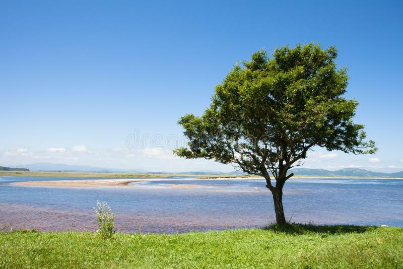 Albero solo sulla banca del fiume su un fondo di cielo blu immagini stock