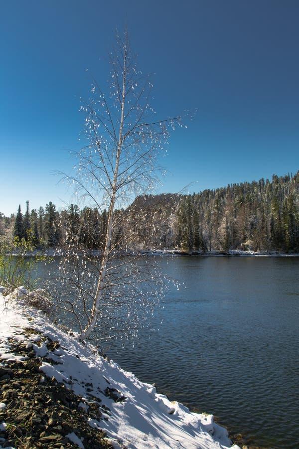 Albero solo sulla banca di un fiume della montagna fotografie stock
