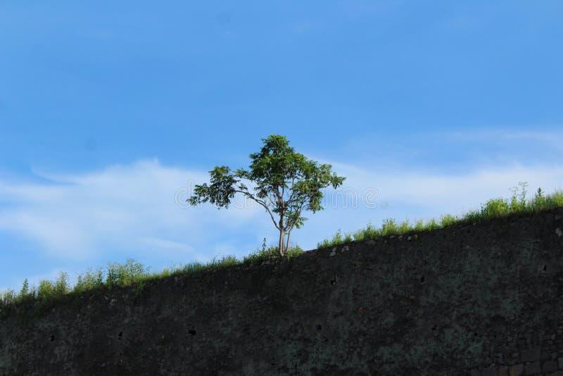 Albero solo sulla cima della fortificazione di golconda a Haidarabad fotografia stock