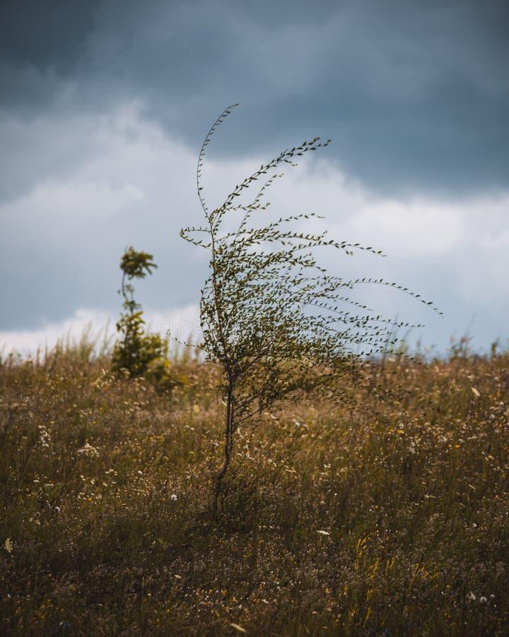 Albero solo in un campo fotografie stock