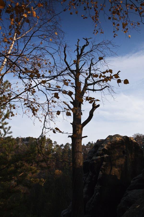 Albero solo in una foresta tranquilla fotografie stock libere da diritti