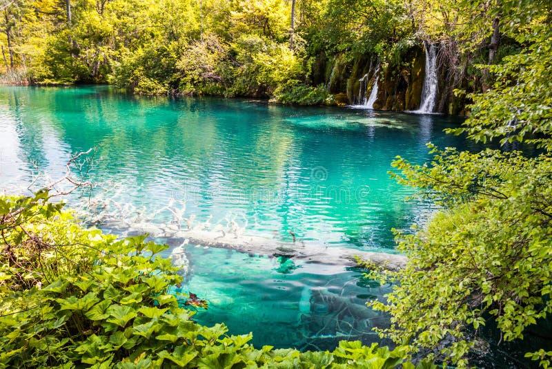 Albero sommerso nell'acqua del turchese del lago della foresta, una cascata nei precedenti Plitvice, parco nazionale, Croazia fotografia stock libera da diritti