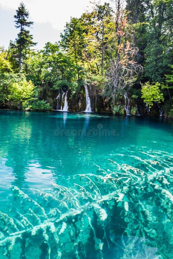 Albero sommerso nelle acque del turchese del lago Forest Plitvice, parco nazionale, Croazia immagini stock libere da diritti