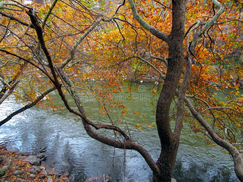 Albero sopra il fiume - Autumn Landscape immagine stock libera da diritti