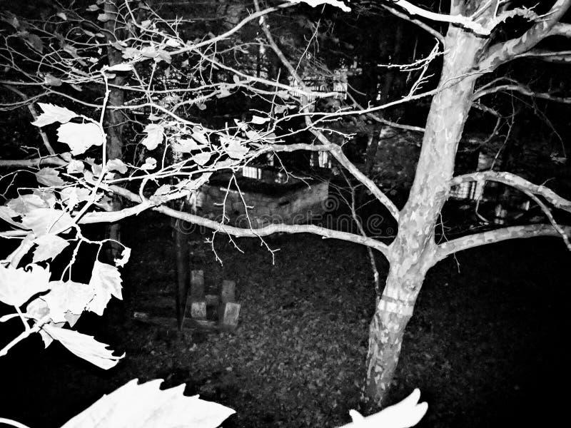 Albero spettrale in bianco e nero fotografia stock
