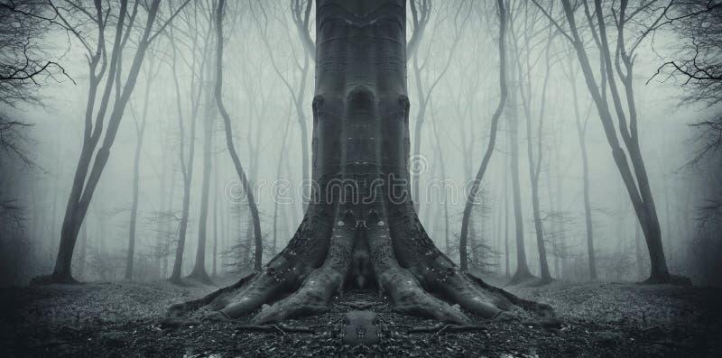 Albero spettrale simmetrico in foresta con nebbia immagini stock