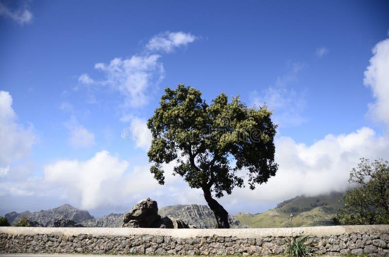 Albero stagionato su una formazione rocciosa fotografia stock libera da diritti