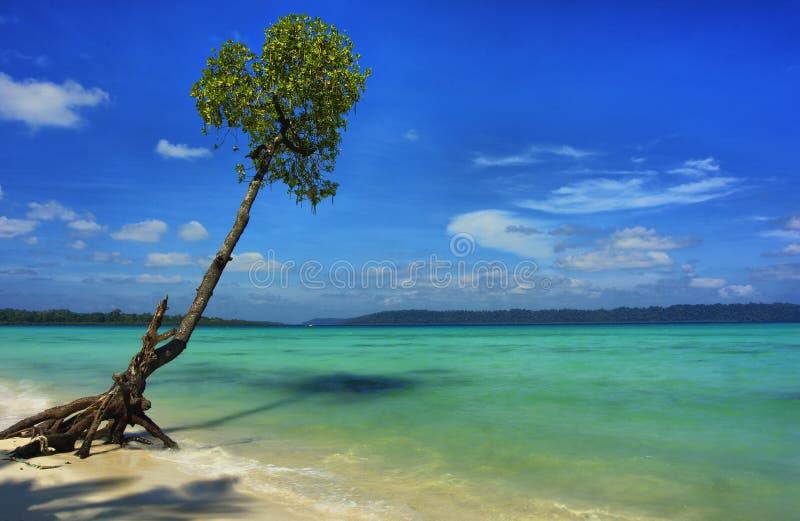 Albero su Andamans fotografia stock libera da diritti