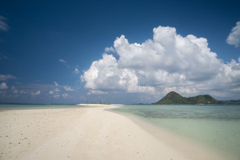 Albero su Bawean, Gresik, Indonesia fotografia stock libera da diritti