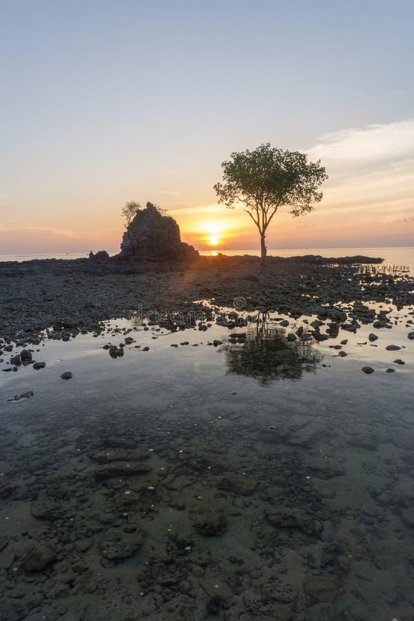 Albero su Bawean, Gresik, Indonesia fotografia stock