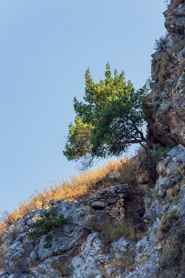 Albero su roccia nuda fotografia stock