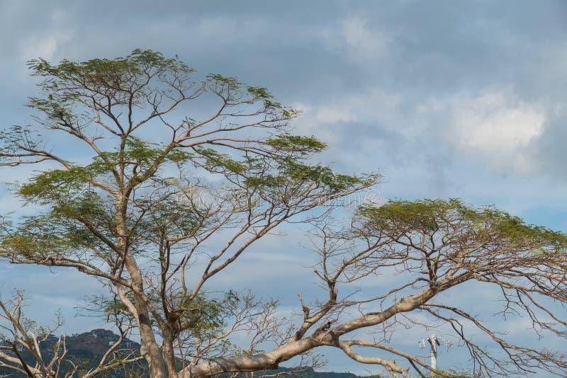 Albero su un cielo nuvoloso fotografia stock