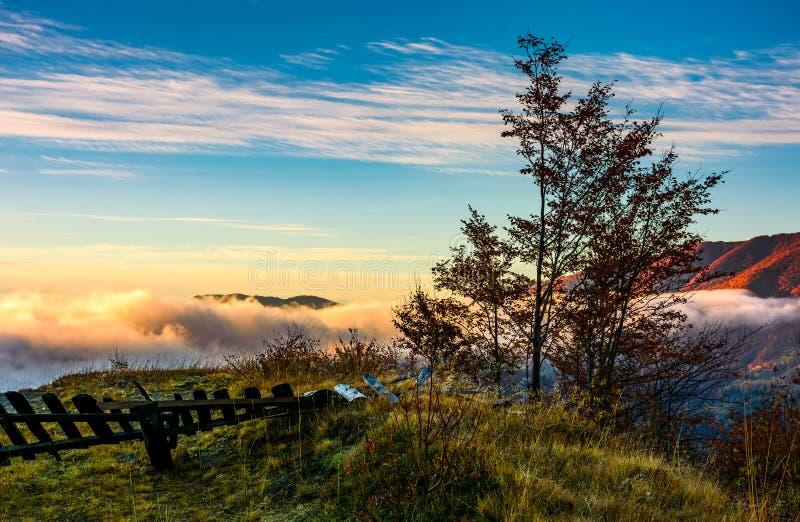 Albero su una gobba sopra la cresta e le nuvole fotografia stock libera da diritti
