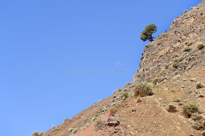 Albero su una montagna. immagine stock libera da diritti