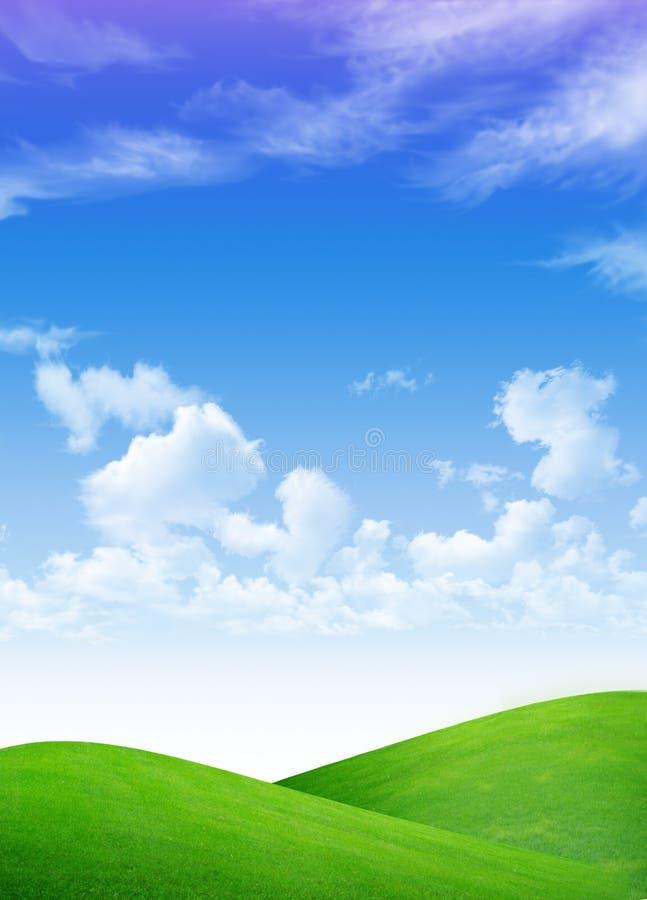 Albero sul campo verde fotografie stock