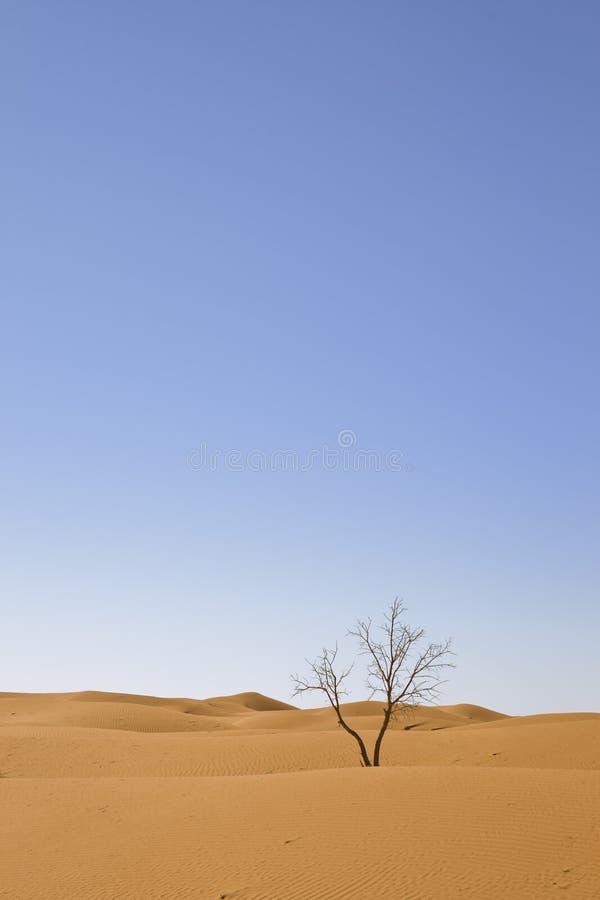 Albero sul deserto fotografia stock